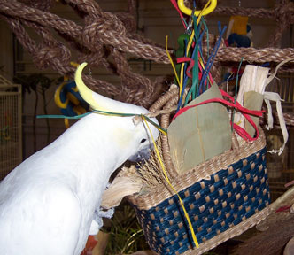 Sydney looking inside the Cage n Queen Parrot Purse