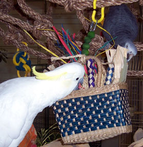 Sydney and Ditto with Cage n Queen Parrot Purse